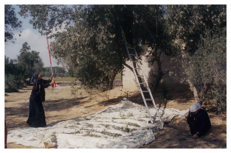 Woman Reaching a Tree