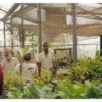 People Visiting Plant Nursery